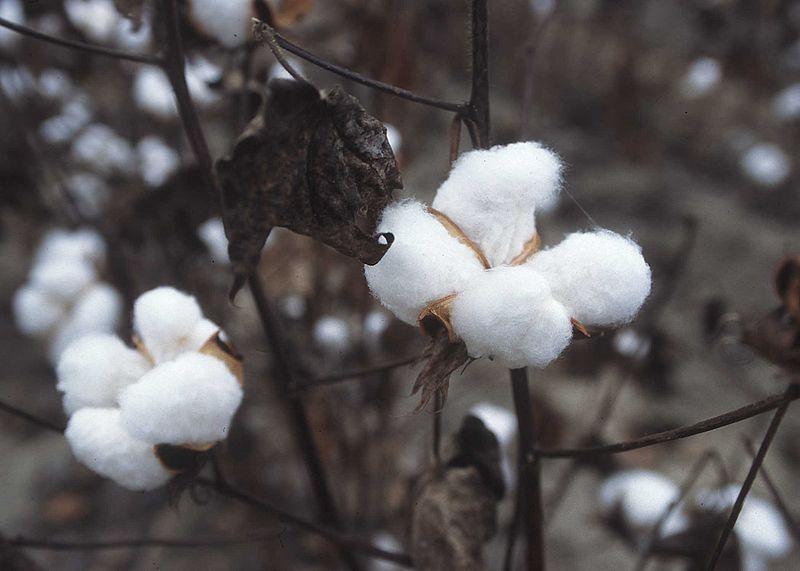 image en noir et blanc d'une boule de coton